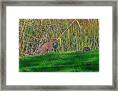 Big Yawn By Little Cub Framed Print