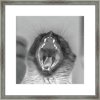 Big Yawn Framed Print