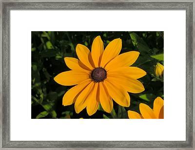 Big Yellow Blossom Framed Print