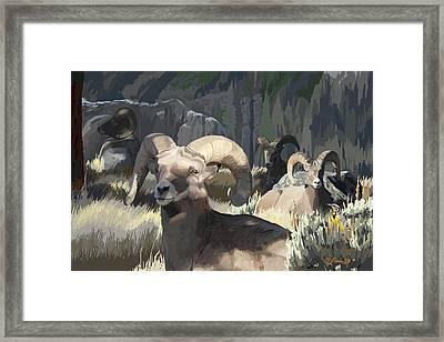 Bighorn Boys Framed Print