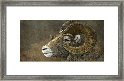 Bighorn Framed Print