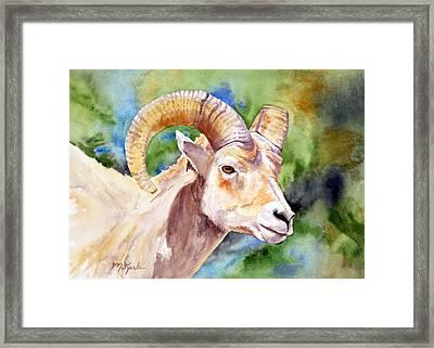 Bighorn Sheep Portrait Framed Print
