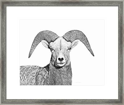 Framed Print featuring the photograph Bighorn Sheep Ram Black And White by Jennie Marie Schell
