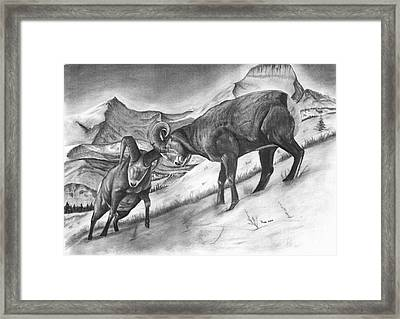 Bighorn Sheep The Battle For Supremacy Framed Print by Russ  Smith