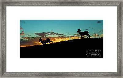 Bighorn Sunset Framed Print by Mike Dawson