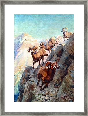 Bighorns Framed Print