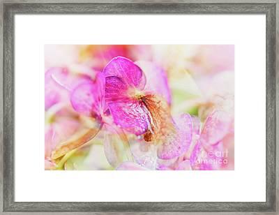 Bigleaf Hydrangea Abstract Framed Print