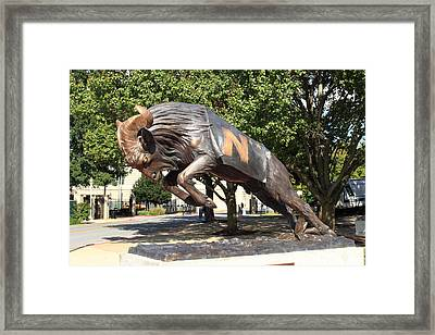 Bill The Goat - Usna Framed Print by Lou Ford
