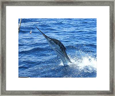 Billfish Jumping By The Boat Framed Print by Ron Walker