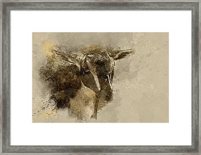 Billy Framed Print