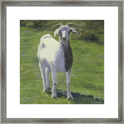 Billy Goat Framed Print by John Reynolds