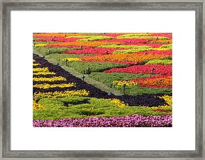 Biltmore Colors Framed Print by David Bearden