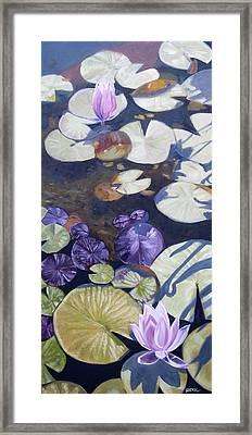 Biltmore Lilypads Framed Print