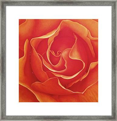 Biltmore Rose Framed Print by Dee Dee  Whittle