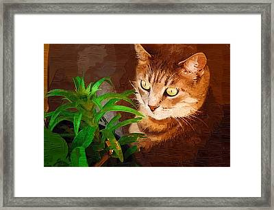 Framed Print featuring the photograph Bink by Donna Bentley