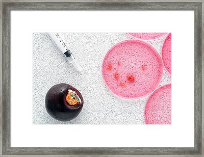 Biological Experiment In Science Research Lab Framed Print by Olivier Le Queinec