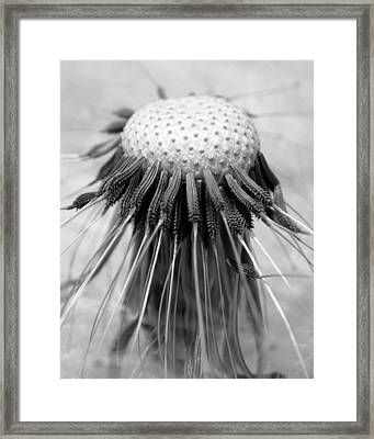 Biology 101 Framed Print by David April