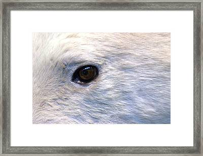 Bipolar Bear Framed Print by Jez C Self