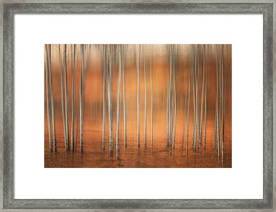 Birch Abstract Framed Print by Naman Imagery
