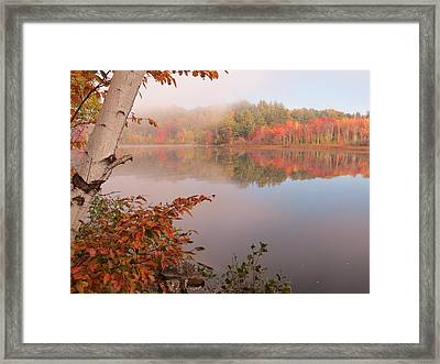 Birch And Beyond Framed Print