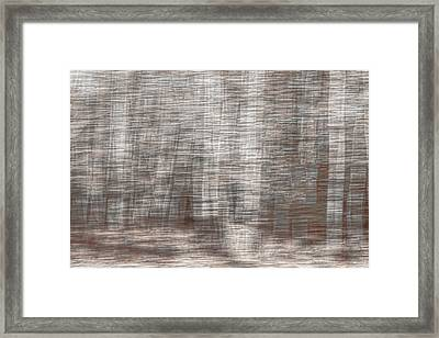 Framed Print featuring the photograph Birch At The Forest Edge by Thomas Young