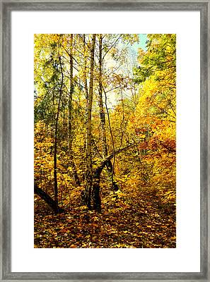 Birch Autumn Framed Print by Henryk Gorecki