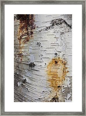 Birch Bark 2 Framed Print