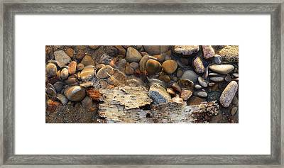 Birch Bark And Ice In The Creek Four  Framed Print