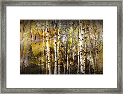 Birch Bark And Trees Abstract Framed Print