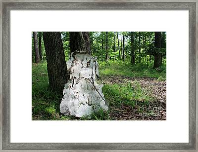 Watch Me Go Birch Bark Cello In The Forest Framed Print