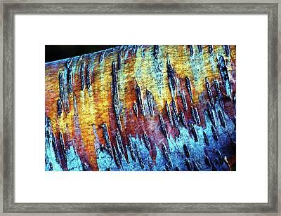 Birch Bark  Framed Print