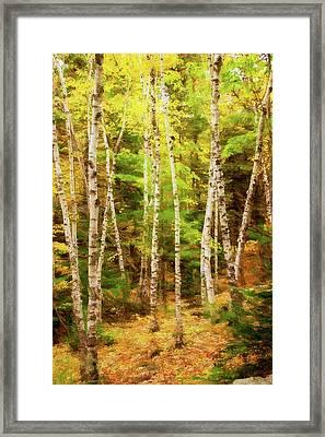 Birch Beauty Framed Print by Terry Davis