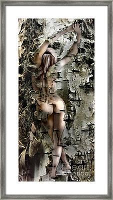 Birch Beauty Framed Print by Tlynn Brentnall