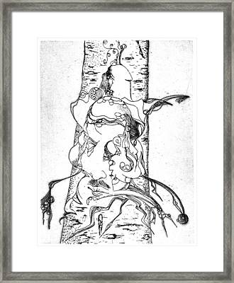 Birch Framed Print by Bodhi
