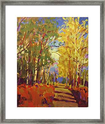Birch Framed Print by Brian Simons