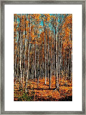 Birch Framed Print by Brigid Nelson