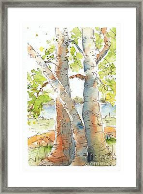 Birch Buddies Framed Print