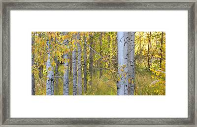 Birch Forest Framed Print by Bonnie Bruno