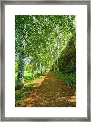 Framed Print featuring the photograph Birch Gauntlet by Greg Fortier