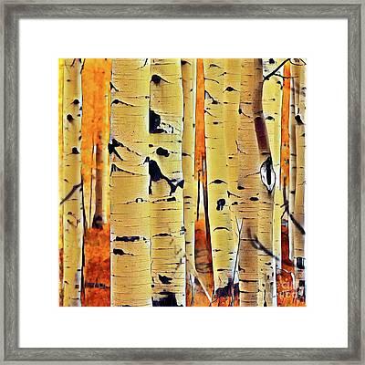 Birch Haven Framed Print by Anthony Djordjevic
