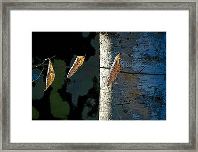 Birch Framed Print