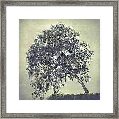 Framed Print featuring the photograph Birch In The Mist by Ari Salmela