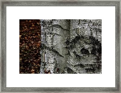 Framed Print featuring the photograph Birch by Kenneth Campbell