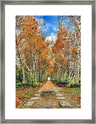 Birch Pathway Framed Print by Kristin Elmquist