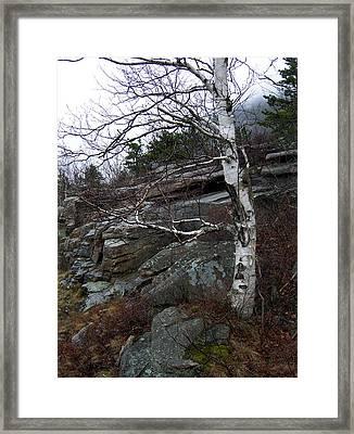 Birch Framed Print by Skip Willits