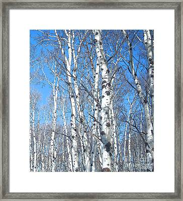 Birch Sky Framed Print