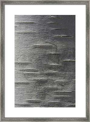 Birch Slits Framed Print
