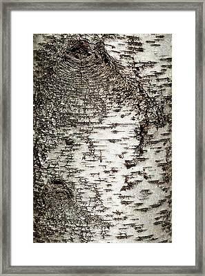 Birch Tree Bark Framed Print