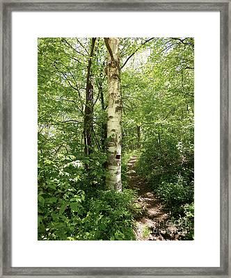 Birch Tree Hiking Trail Framed Print by Phil Perkins