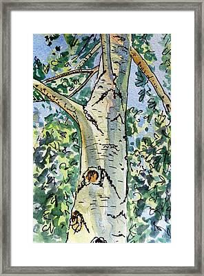 Birch Tree Sketchbook Project Down My Street Framed Print by Irina Sztukowski